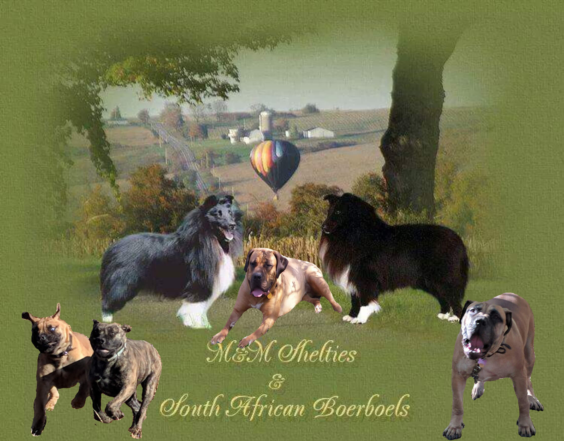 M&M Shelties and South African Boerboels