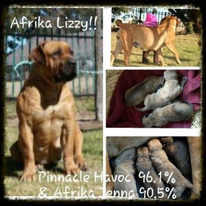 Afrika Lizzy